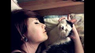 ردت فعل قطة عند سماع اغاني رمنسية