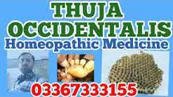 Thuja occidentalis homeopathy remedy for Warts, boils, dandruff