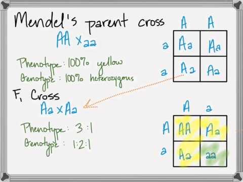 Genetics Lesson 1, Part 3: Mendelian Laws