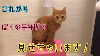 生後4カ月から10カ月までの子猫の成長の記録!
