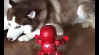 동물농장 TV - Animal Kingdom #5