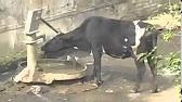 Все частные объявления в мозыре хххх. Хотите купить, продать или поменять корову, козу, коня, лошадь, курей, гусей и другие сельхозживотные в городе мозырь и калинковичи?
