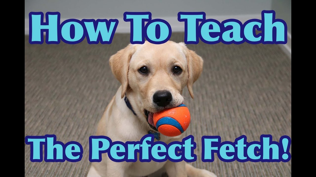 Does Your Dog Know How to Fetch? It Will After You Watch This Video!