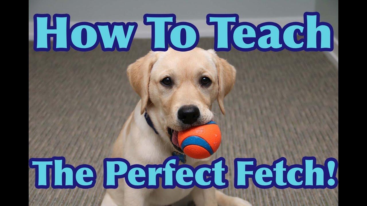 teach a dog to fetch
