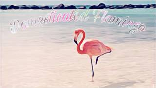 domesticated.flamingo.mp3