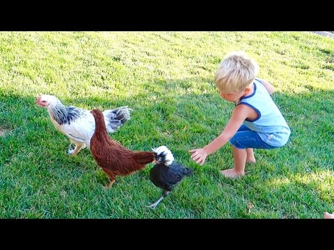 PLAYING WITH CHICKENS!!