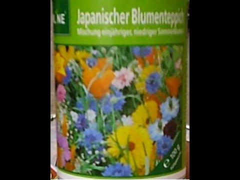 Japanische Blumentepich Pflanzen Japanese Flower Potted Plants