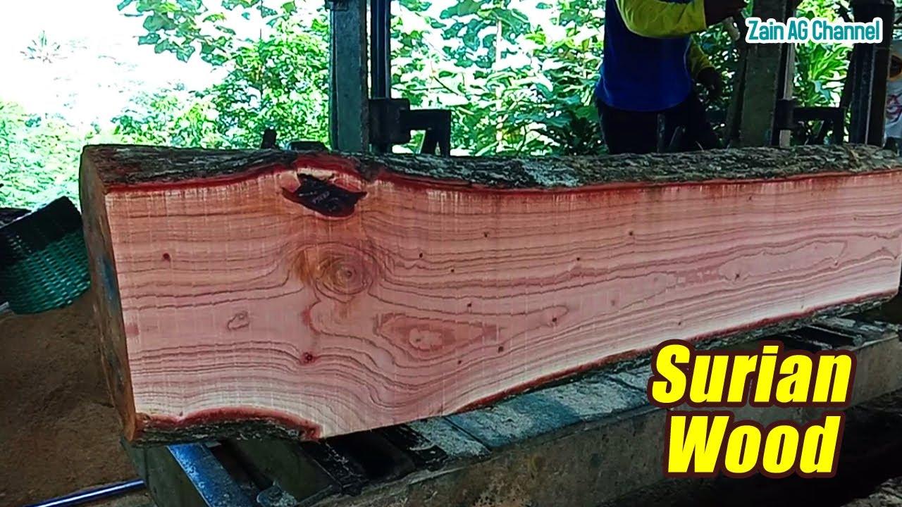Beautiful Sawmill Surian Wood