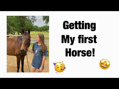 getting-my-first-horse