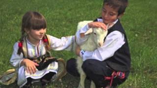 Drina - Zare i Goci, 2013 ORIGINAL