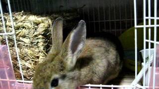 変態ウサギなんです。 足が大好き! 角質化した部分は食べられちゃいま...