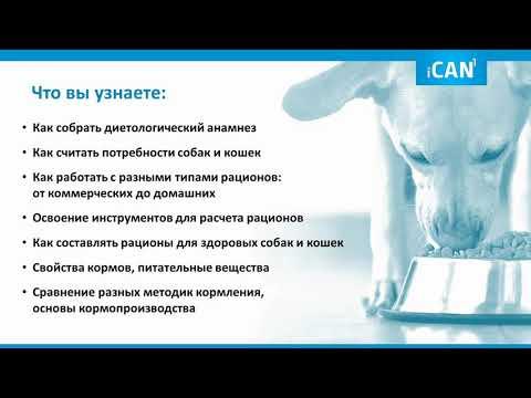 Курс диетологии от Анны Линевой