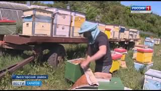 Саратовские пчеловоды осваивают и внедряют современные технологии