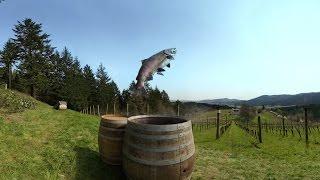Wine Tasting in 360°