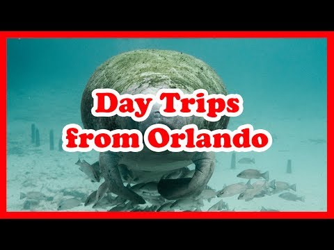 5 Top-Rated Day Trips from Orlando, Florida | United States Day Tours Guide
