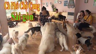 Cà Phê Chó Cưng Vui Nhộn Có Một Không Hai ở Sài Gòn | Pets house coffee