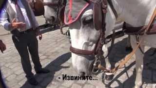 VLOG: Пешком по Вене(, 2013-07-29T11:52:08.000Z)