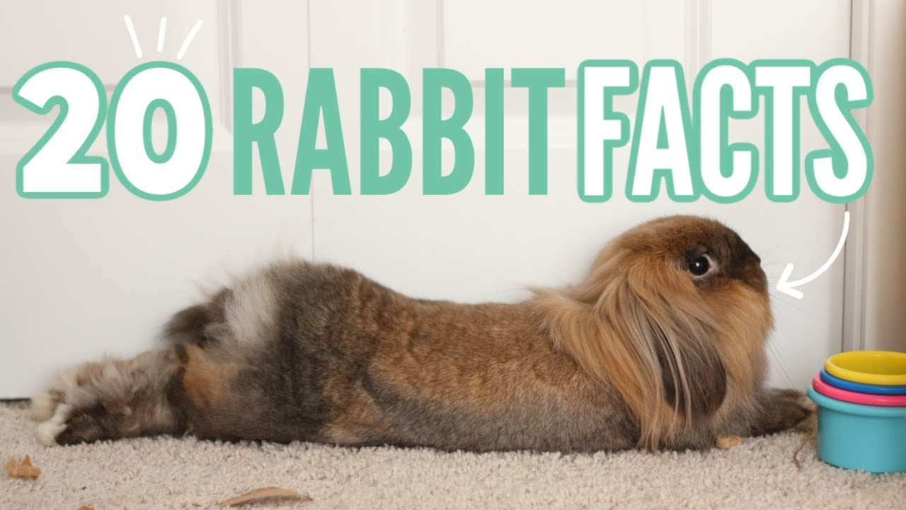 20 Facts About Rabbits 🐰
