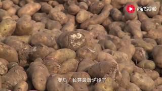 【發明迷】 幾千斤土豆賣不出去,小伙一急造土豆粉機,一天加工2萬斤土豆粉