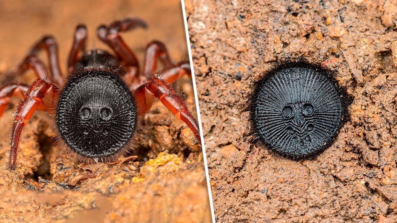 Dünyadaki En Zehirli 10 Örümcek Türü