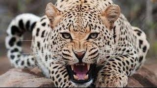 Домашние кошки желают охотиться!