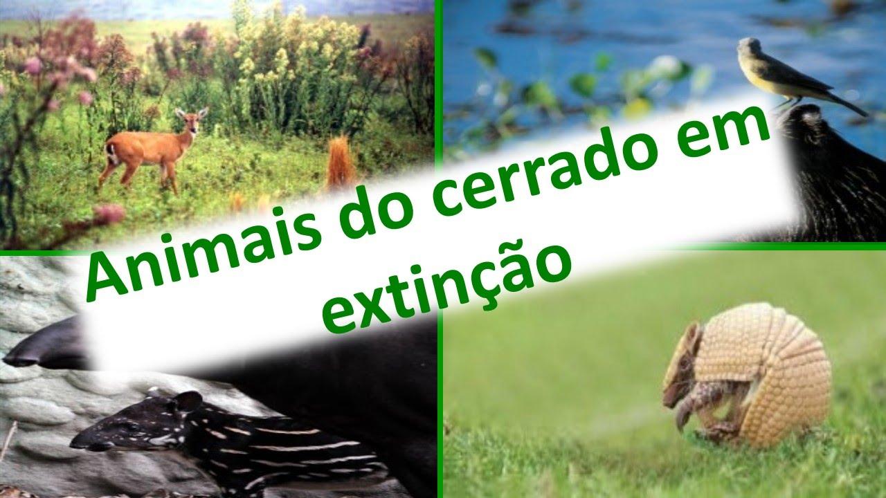 Muitas vezes Animais do Cerrado em Extinção | Bioma do Cerrado | Fauna do  UU12