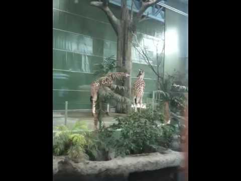 African Savannah at the Calgary Zoo