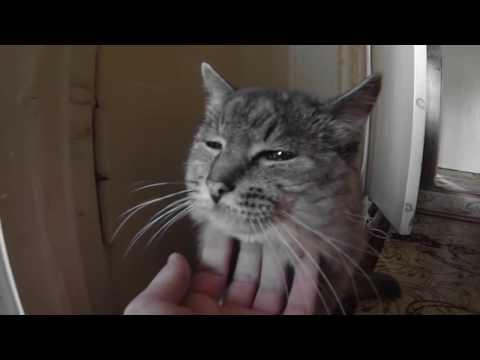 видео: Любимый кот...умер...