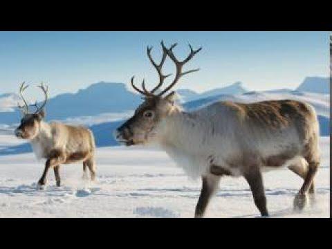 Northern Siberian Folk Music (Republic Sakha, Yakutia)