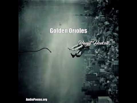 Golden Orioles (Ranjit