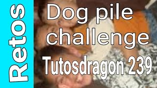 Reto de Dog pile Challenge (Soy el jamon)