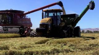 October rice harvest in Colusa County