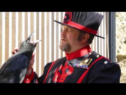 4dd05514 Baby raven Poppy