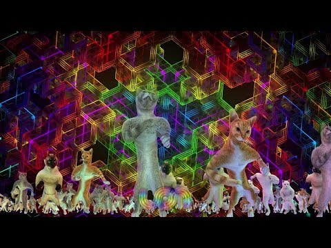 UON VISUALS DANCING CATS - SHAMBHALA 2019 MIX