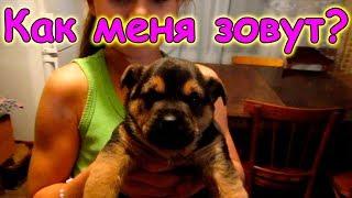 Щенку Джесси дали имя. Любимец Саши. (11.17г.) Семья Бровченко.