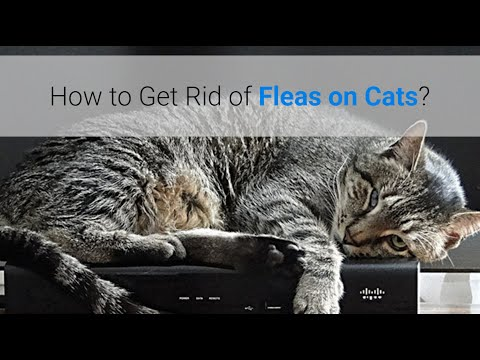 Home remedies to get rid of fleas on cats and dogs