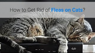 How Many Treatment To Get Rid Of Fleas On Cat