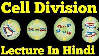 Cell Division & Cell Cycle (Hindi): Mitosis, Meiosis, Amitosis