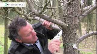 Hoe kun je een fruitboom snoeien? - Tuinieren.nl