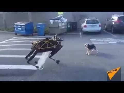 Robot Dog and original Dog