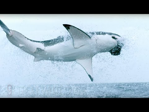 11 EPIC Slow Motion Ocean Clips! | Earth Unplugged
