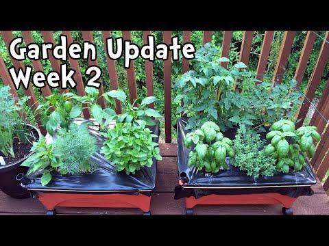 Sip Garden Update Week 2 Youtube