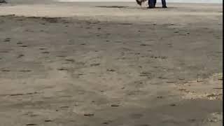Dog Sex Serenade part II