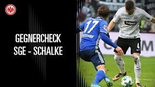 Gegnercheck   Eintracht Frankfurt - Schalke 04