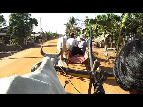 Oxcart ride in Cambodia