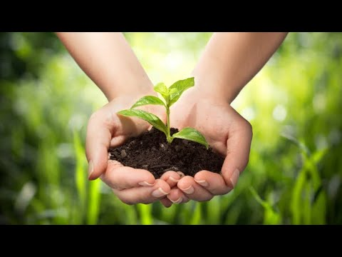 Секрет успешного выращивания растений. Компостный ящик