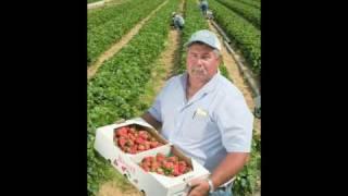 Shlagel Strawberries