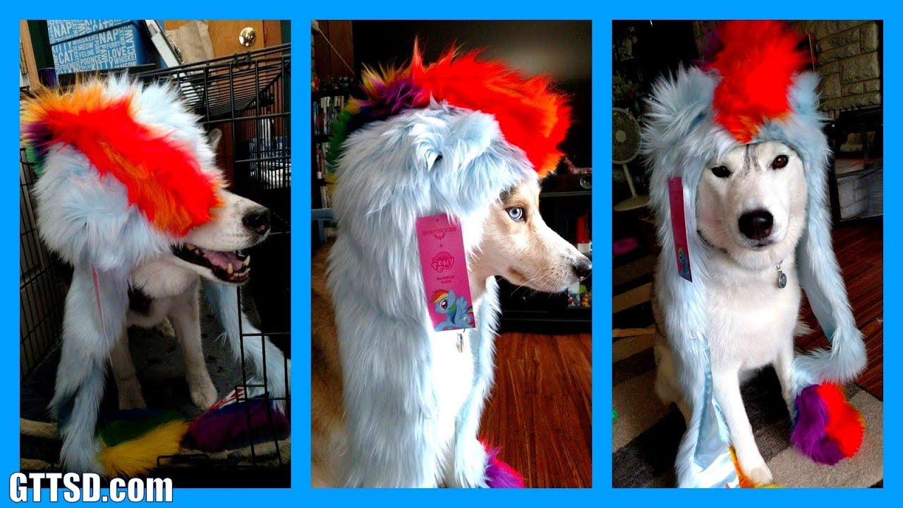 Rainbow Dash Spirithood My Little Pony Dog Youtube