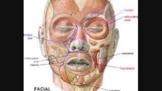 Cranial Nerve Mnemonic (Gus Halwani)