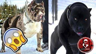 TOP 7 ANIMALES QUE FUERON CREADOS POR EL DIABLO